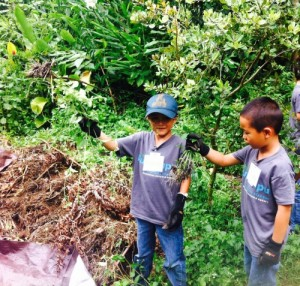 Innovations Academy Students pulling Kalo web