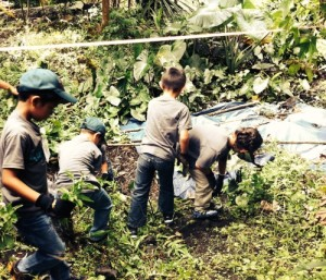 Innovations Academy students pulling weeds at the Pana'ewa Discovery Forest web