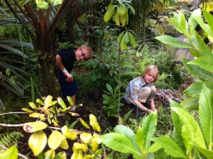 Malamalama Waldorf Students tending to Native Species low